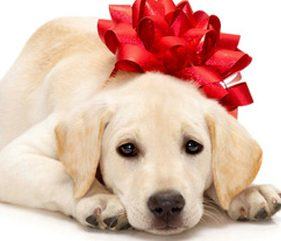 Can gifting a dog ever be a good thing?